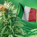 Las mejores variedades de cannabis para cultivar en Italia en 2017