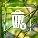 Tallos de marihuana: ¡No los tires!
