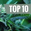 Top 10 De Variedades De Marihuana Medicinal