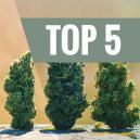 Top 5 De Cepas Autoflorecientes Más Productivas