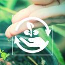 Las Diferentes Fases Del Cultivo De Cannabis Y Por Qué Son Importantes