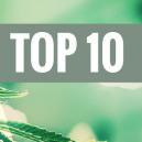 Top 10 De Variedades Cannabis De Kush
