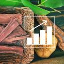 Cómo Cultivar Banisteriopsis Caapi A Partir De Semillas