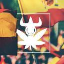 Top 10 De Variedades De Los Clubs de Cannabis Españoles