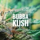 Reseña de Cepa: Bubba Kush