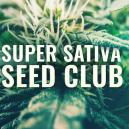 ¡Super Sativa Seed Club Ha Vuelto!