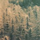 ¿Qués Son Cepas de Cannabis Autóctonas y Reliquias?