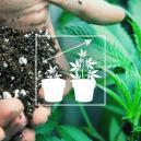 Cultivo Exterior De Cannabis: La Mejor Mezcla De Suelo