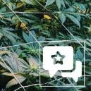 Reseña de Cepa: Casey Jones