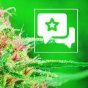 Reseña de Cepa: White Widow