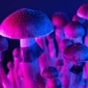 Las Setas Mágicas y el Cerebro Hiper-Conectado