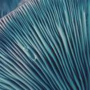 Efectos De Las Setas Mágicas: Consejos Para Principiantes