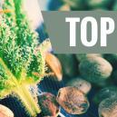 Nuestros 10 Bancos de Semillas Más Populares