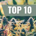 Nuestro Top 10 de Cepas Feminizadas de Exterior