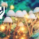 5 Sorprendentes Beneficios De Las Setas Mágicas