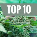 Top 10 de Errores Comunes Del Cultivador