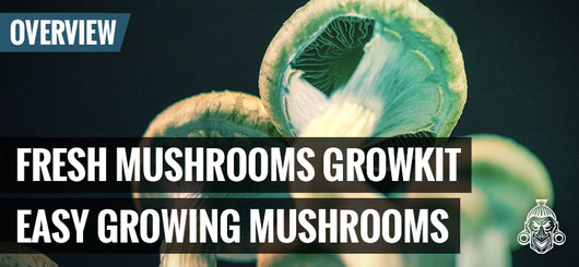 Kit De Cultivo Fresh Mushrooms - Setas Fáciles De Cultivar